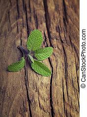 Fresh garden sage on a vintage wood background