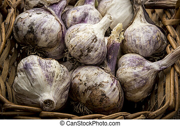 Fresh garlic bulbs in a basket.
