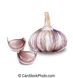 Fresh garlic isolated