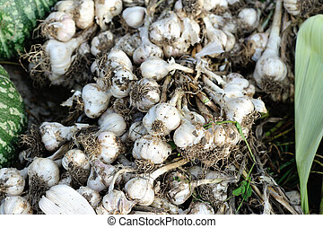 fresh garlic selling at vegetable market