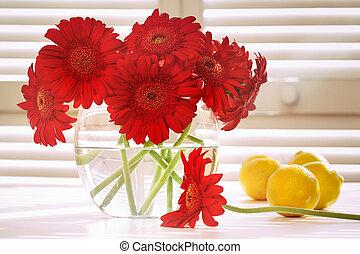 Fresh gerbera daisy in on table