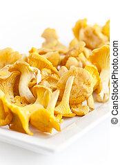 chanterelles - fresh golden chanterelles piled on the table