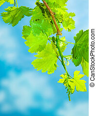 Fresh grape leaves border