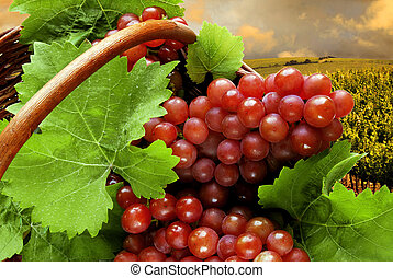 Fresh grapes and leaves in basket