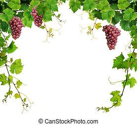 Fresh grapevine border