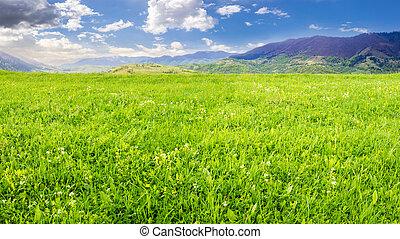 fresh grass meadow near the mountains - rural landscape....