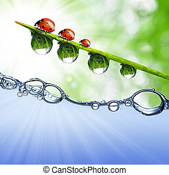 dew drops - Fresh grass with dew drops above the water level...