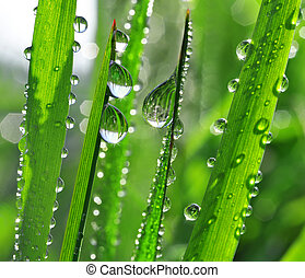 dew drops  - Fresh grass with dew drops close up