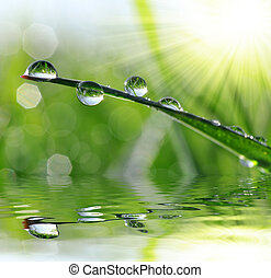 dew drops  - Fresh grass with dew drops close up