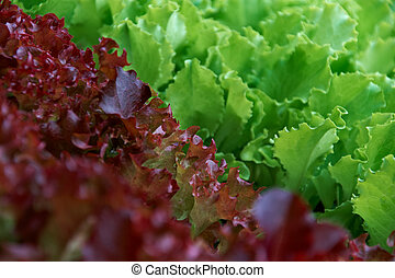 fresh green and red salad on bed