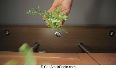 Fresh green aragula salad leaf dropped on food - Fresh green...