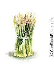 Fresh green asparagus, watercolor illustration