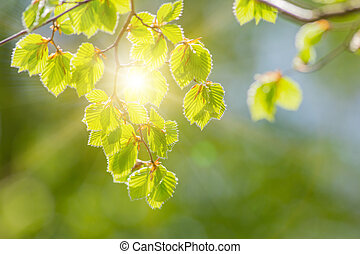 Fresh green background with leaves.