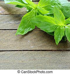fresh green basil, food closeup