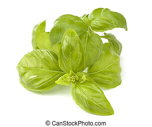 basil - fresh green basil leavesisolated on white close up