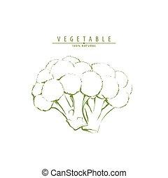 Fresh green broccoli - Fresh tasty green fresh broccoli