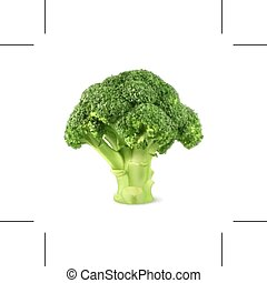Fresh green broccoli, isolated on white background