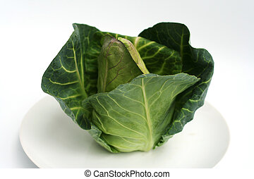 Fresh green cabbage shot on a white plate