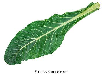 Fresh green cabbage leaf