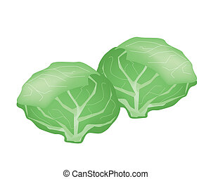 Fresh Green Cabbage on A White Background