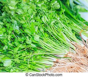 Fresh green coriander or cilantro leaves
