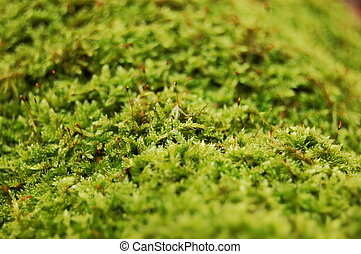 fresh green dosh in the forrest at fall or autumn