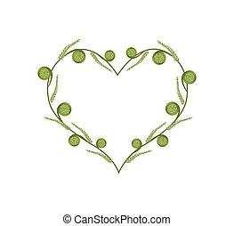 Fresh Green Fiddleheads in A Beautiful Heart - Love Concept,...