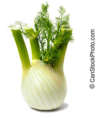 Florence fennel bulb on white - Fresh green Florence fennel ...