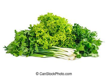fresh green foliage on a white background. parsley, cilantro, on
