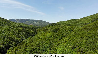 Fresh green forest and the blue sky, view from above