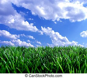 fresh green gras with blue sky