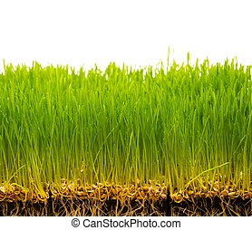 Fresh green grass and soil with seeds