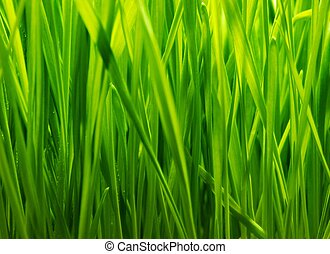 Fresh green grass background
