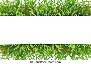 Fresh green grass banner isolated on white background