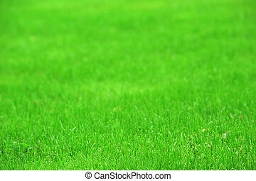 green grass - fresh, green grass clippings on lawn