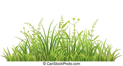 Fresh green grass - Green grass on white background