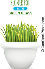 Fresh green grass in a pot. Element of home decor. The symbol of growth and ecology