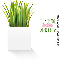 Fresh green grass in a square pot. Element of home decor. The symbol of growth and ecology