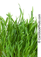 Fresh green grass isolated on white