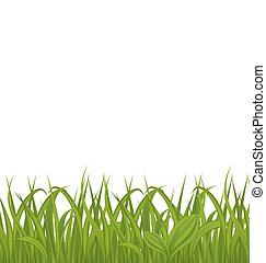Fresh green grass isolated on white background, space for your text