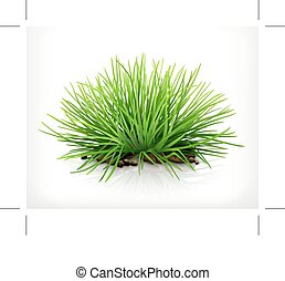 Fresh green grass, isolated on white background