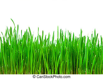 Fresh Green Grass isolated on white with copy space