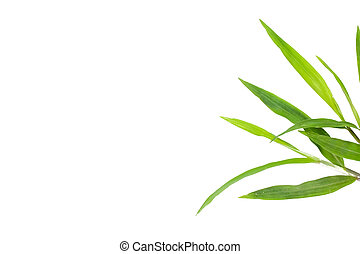 fresh green grass leaves on white background