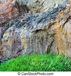 Fresh green grass on rock stone background, closeup