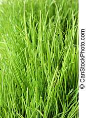 Fresh Green Grass - Green grass background with drops of...