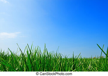 summer background  - fresh green grass summer background