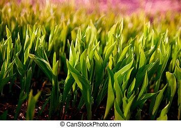 Fresh green grass. Sunlight illuminates the leaves in the evening.