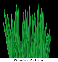 Fresh green grass tussock isolated on black - Fresh straight...