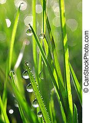dew drops - Fresh green grass with dew drops closeup. Nature...
