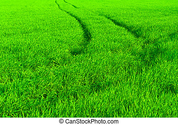 fresh green grass with path